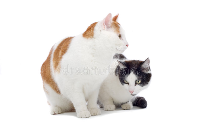 Sluit omhoog van twee leuke katten royalty-vrije stock afbeeldingen