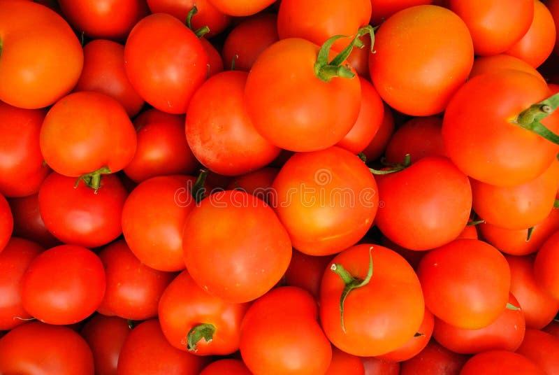 Sluit omhoog van vele verse rode tomaten royalty-vrije stock foto's