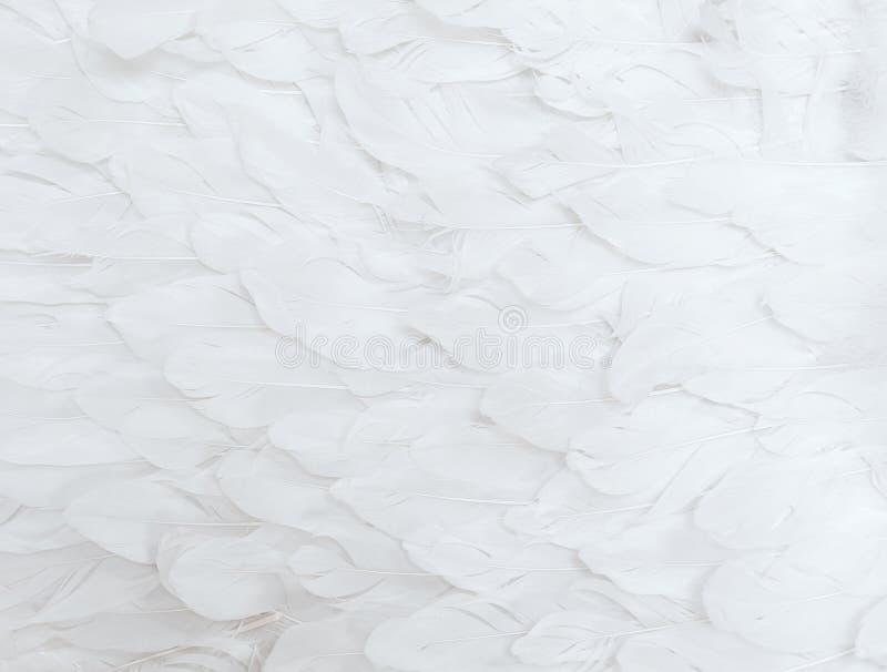 Witte Veren stock afbeelding