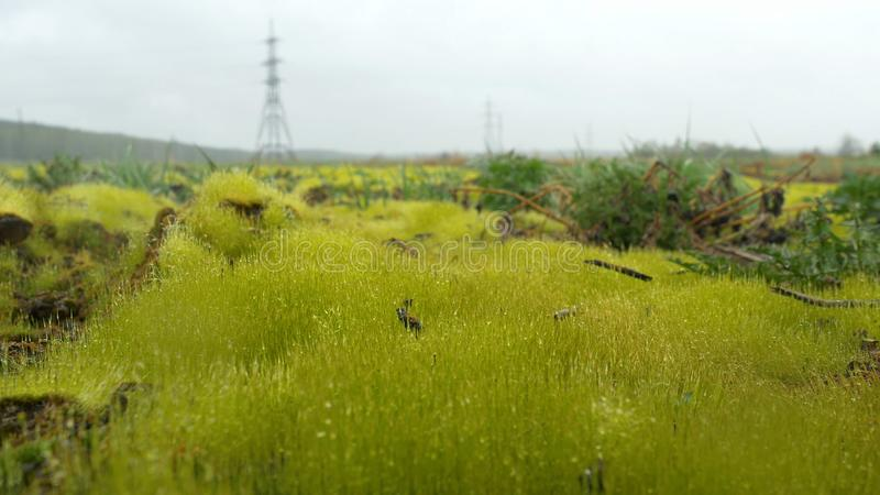 Sluit omhoog van vers dik gras met waterdalingen in de vroege ochtend Vers groen gras met het close-up van waterdalingen Dalingen stock afbeelding
