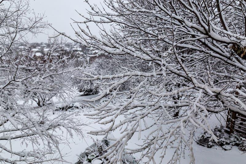 Sluit omhoog van verse de boomtakken van de sneeuwdeklaag royalty-vrije stock foto