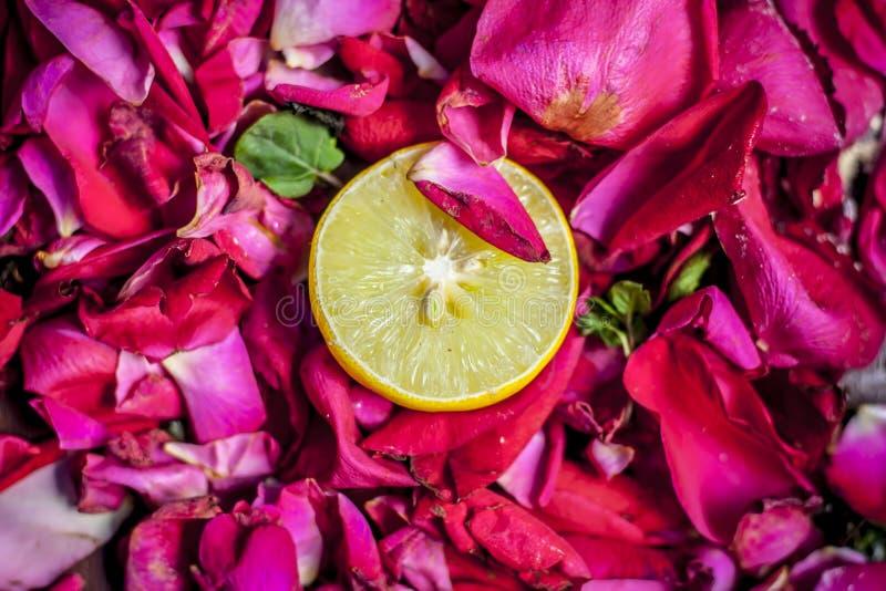 Sluit omhoog van verse gesneden citroen, nam de Citrusvrucht Ã- limon op roze en rood, Rosa bloemblaadjes toe stock fotografie