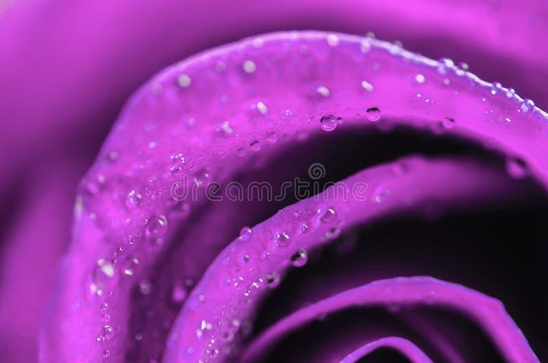 Sluit omhoog van violette roze bloem met waterdalingen stock foto