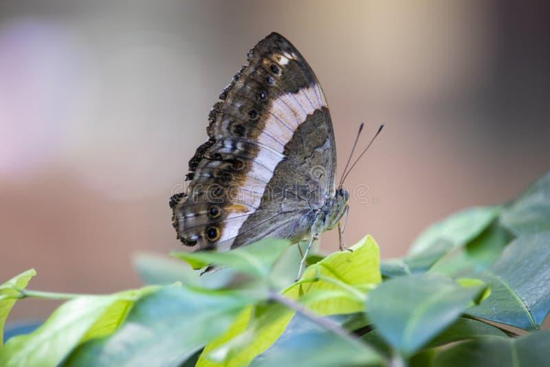 Sluit omhoog van vlinder op een blad stock afbeelding