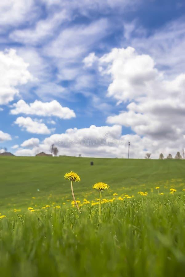 Sluit omhoog van wilde bloemen in het midden van een weide met levendige grassen in de lente royalty-vrije stock afbeeldingen