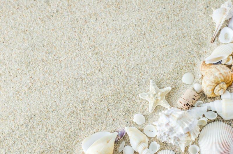Sluit omhoog van zeester en zeeschelpen op witte zandachtergrond met stock afbeelding