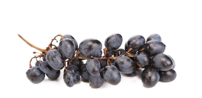 Sluit omhoog van zwarte rijpe druiven. stock fotografie