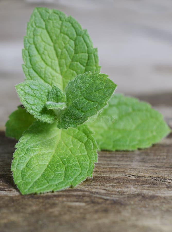 Sluit omhoog verse groene pepermuntbladeren Muntkruiden op uitstekende houten lijst stock foto
