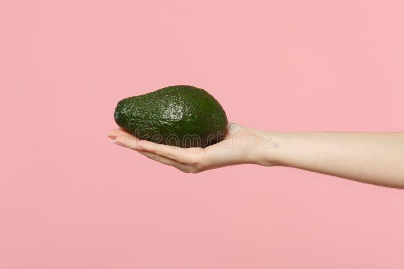Sluit opgedoken foto van het vrouwelijke fruit van de greep ter beschikking verse rijpe groene die avocado op de roze achtergrond royalty-vrije stock afbeelding