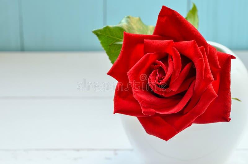 Sluit van mooie rood steeg bloem royalty-vrije stock afbeelding
