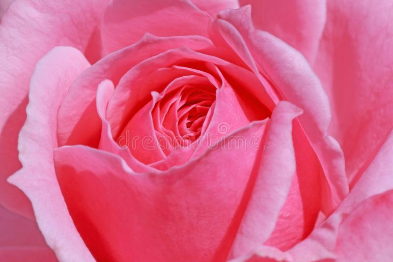 Sluit van roze steeg stock afbeeldingen