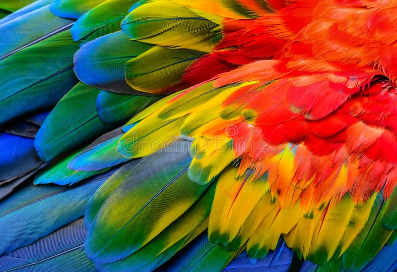 Sluit van Scharlaken ara omhoog vogel` s veren royalty-vrije stock foto