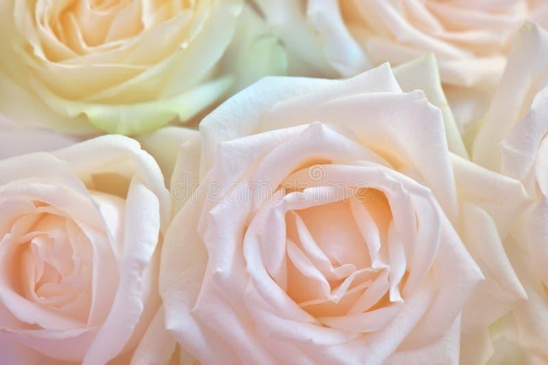 Sluit van wit steeg Abstracte bloemachtergrond Bloemen met kleurenfilters die worden gemaakt stock afbeeldingen