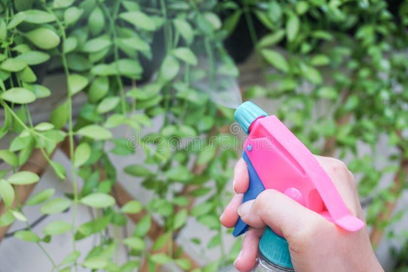 Sluit vrouw die en kleine groene installatie in huistuin water geven omhoog bespuiten met mistig royalty-vrije stock afbeelding