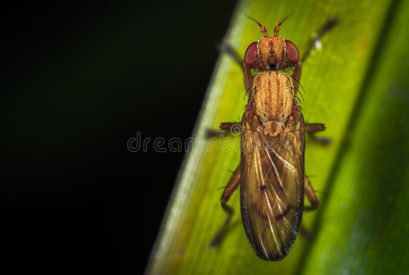Sluiten Foto van Brown Insect Perching op Green Leaf royalty-vrije stock foto