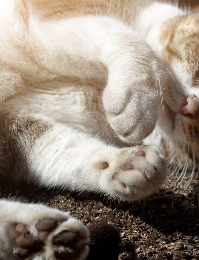 Sluiten van fluffy paws in stof, neus en snor van een straatkat royalty-vrije stock afbeeldingen