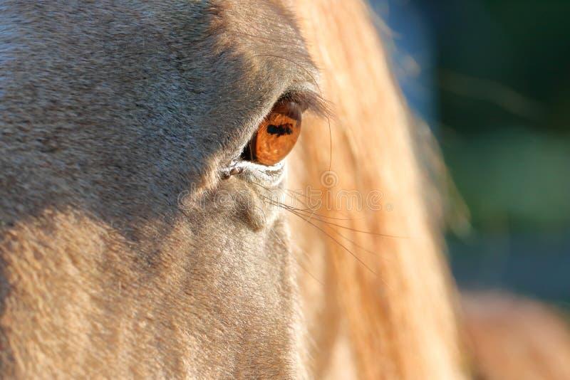 Sluiten van het Eyeball van Horse royalty-vrije stock afbeeldingen