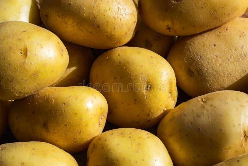 Sluiting van hele gele aardappelen in het zonlicht Groenten, vegetariër en gezond eten Voedingsingrediënten stock foto