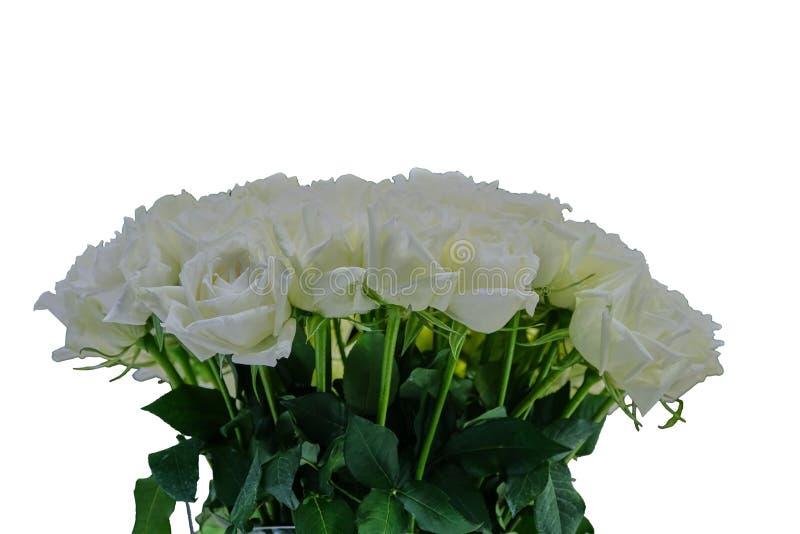 Sluiting van het huwelijk van White Rose, geïsoleerd op witte achtergrond royalty-vrije stock afbeeldingen