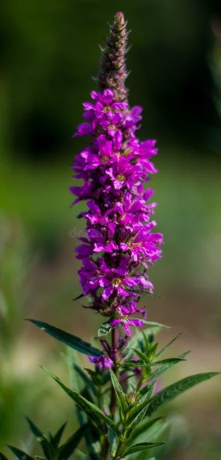 Slumpmässig blomma royaltyfri foto