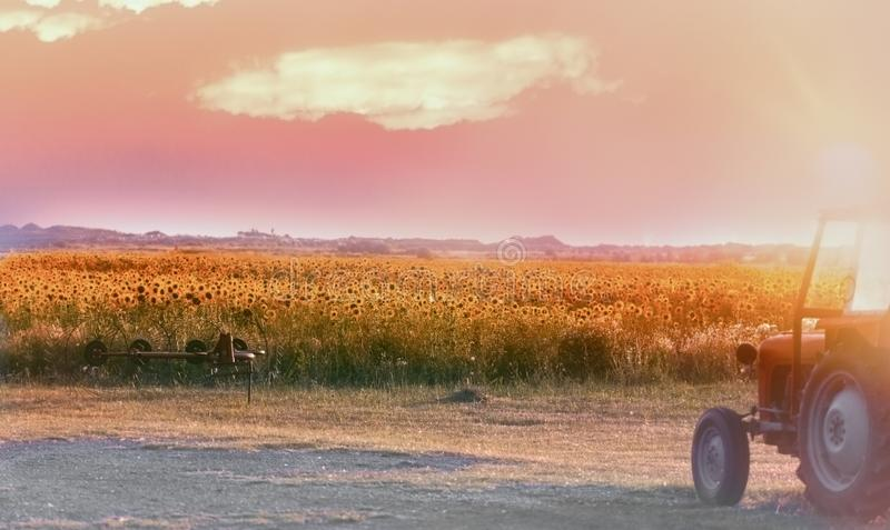 Slut av dagen i det jordbruks- fältet, efter arbete har avslutats - i solrosfältet royaltyfria foton
