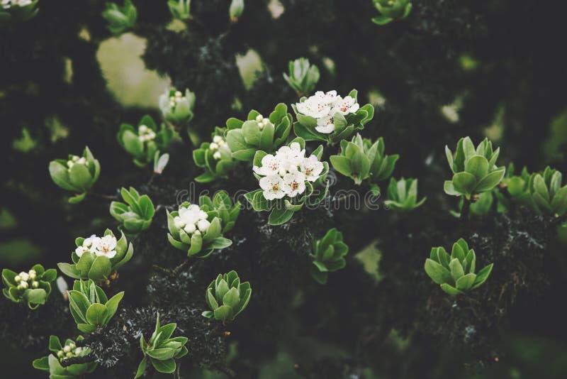 Slut för härlig vår för träd för vita blommor säsongsbetonat upp royaltyfri foto