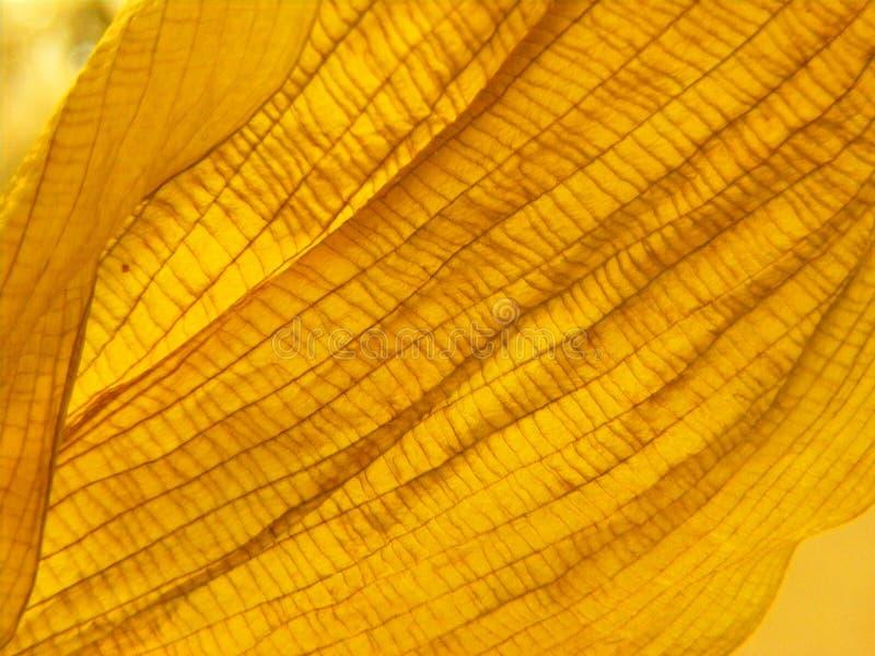 Slut för textur för blad för höstapelsin torrt upp royaltyfria bilder