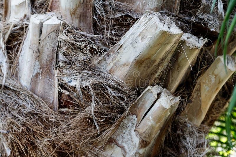 Slut för trädstam upp, skälltextur arkivbild