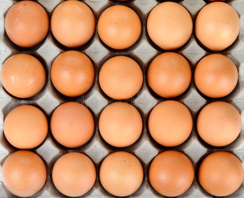 Slut upp ägget i paketbakgrundstextur royaltyfri foto
