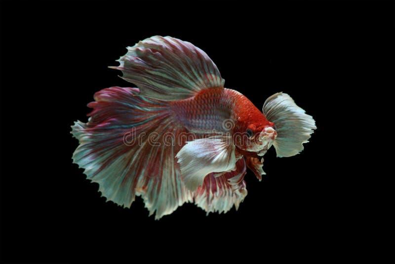 Slut upp av bättre fisk royaltyfria bilder