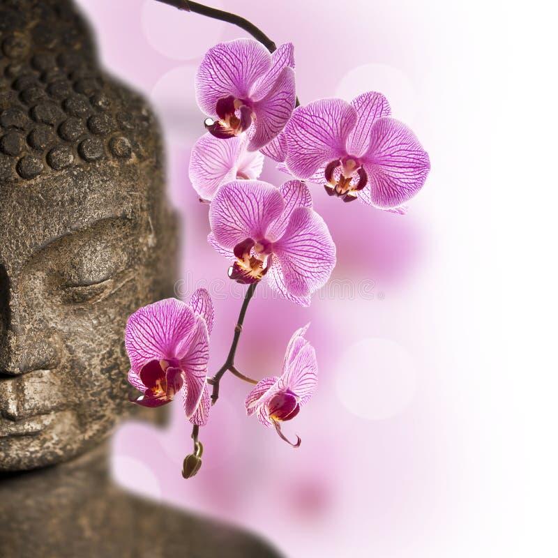 Slut upp av den Buddhahuvudet och orkidén royaltyfri fotografi