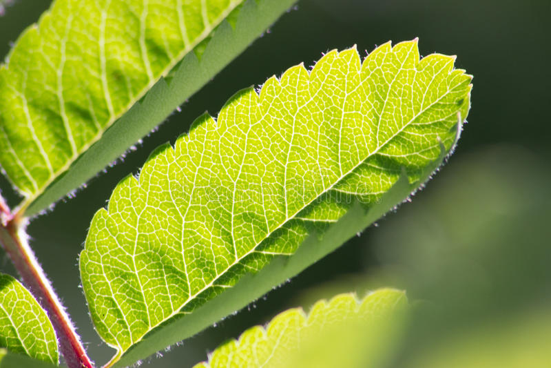 Slut upp av den gröna bladdetaljen fotografering för bildbyråer