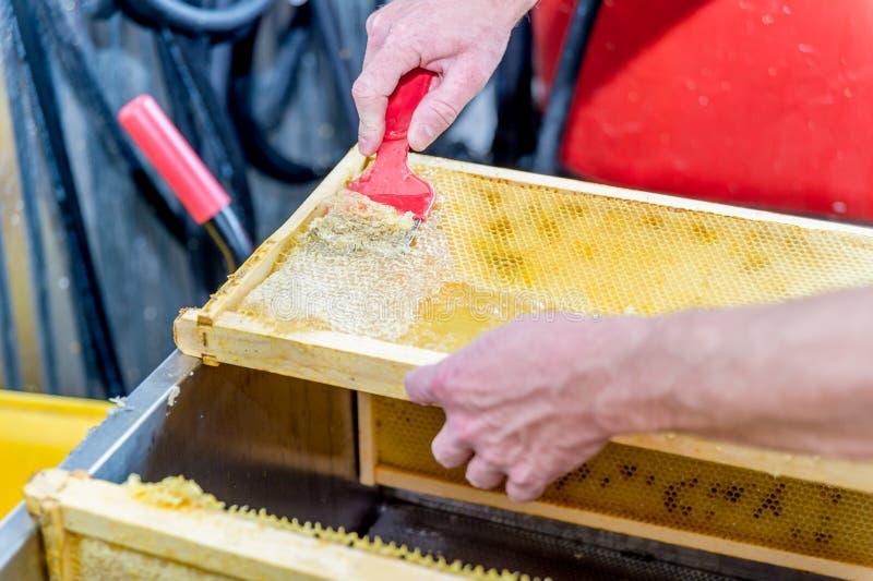 Slut upp av den mänskliga handen som drar ut honung från honungskakan arkivbild