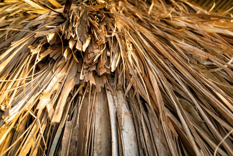 Slut upp av det halmtäckte taket på den traditionella afrikankojan, Kenya royaltyfria foton