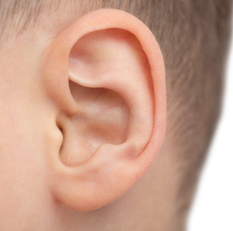 Slut upp av det manliga örat arkivfoton