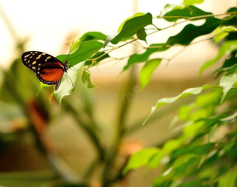 Slut upp av en härlig fjäril arkivfoto