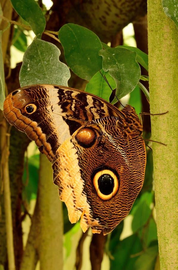 Slut upp av en härlig fjäril fotografering för bildbyråer