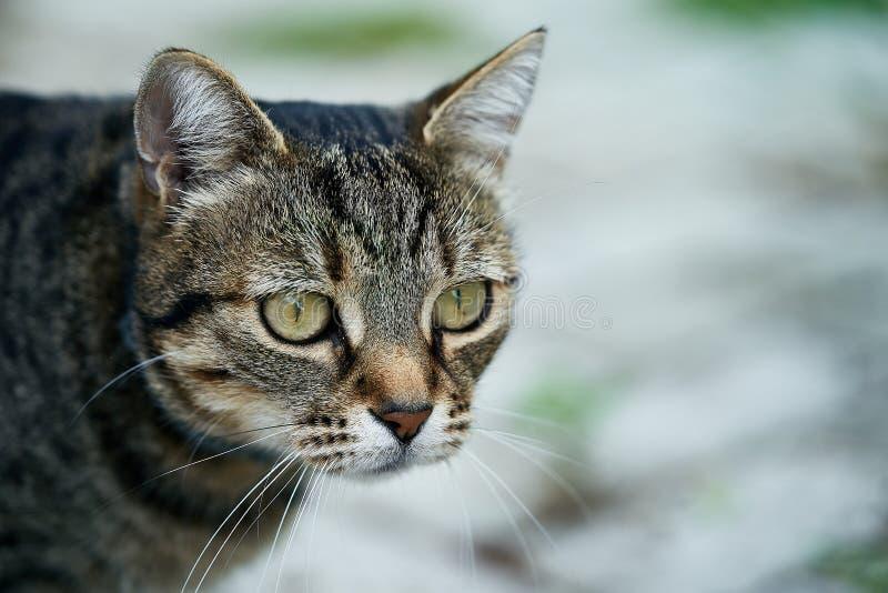 Slut upp av en inhemsk katt arkivbild
