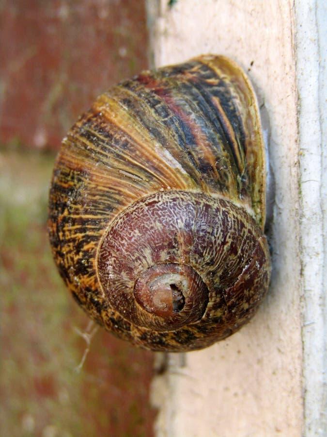Slut upp av en trädgårds- snail arkivbild