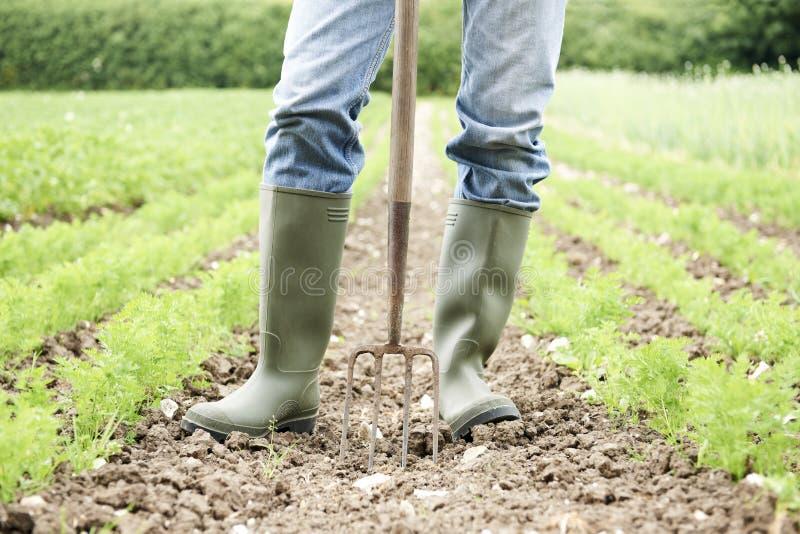 Slut upp av fältet för bondeWorking In Organic lantgård royaltyfria foton