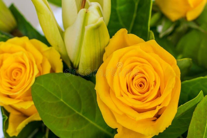 Slut upp av gula rosor 2 royaltyfri bild