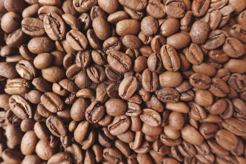 Slut upp av kaffeb?nor royaltyfri fotografi