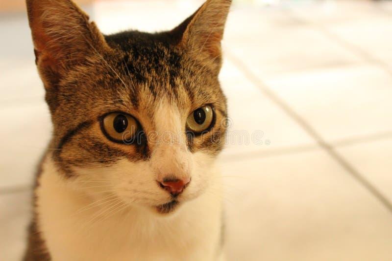 Slut upp av katten fotografering för bildbyråer