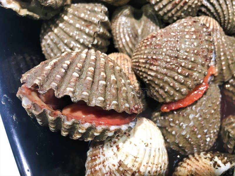 Slut upp av ny rå skaldjur royaltyfria bilder