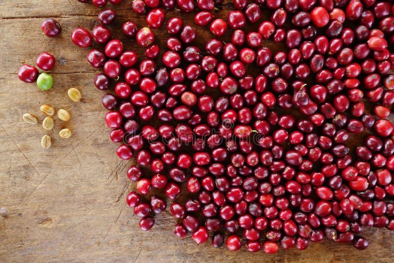Slut upp av nya kaffebönor royaltyfria foton