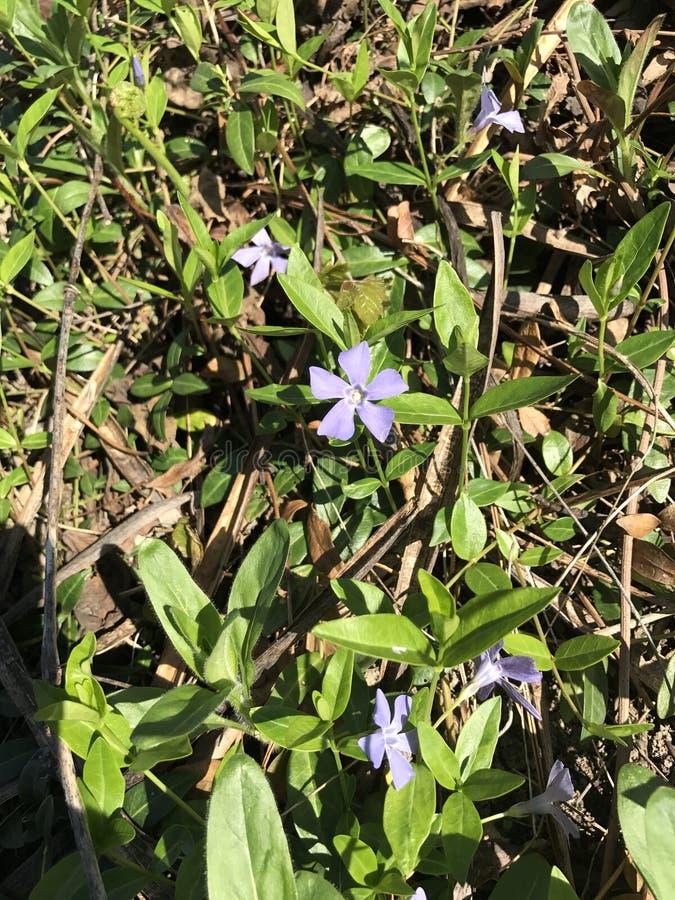 Slut upp av purpurfärgade blommor royaltyfria foton