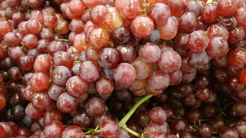 Slut upp av röda druvor royaltyfri bild