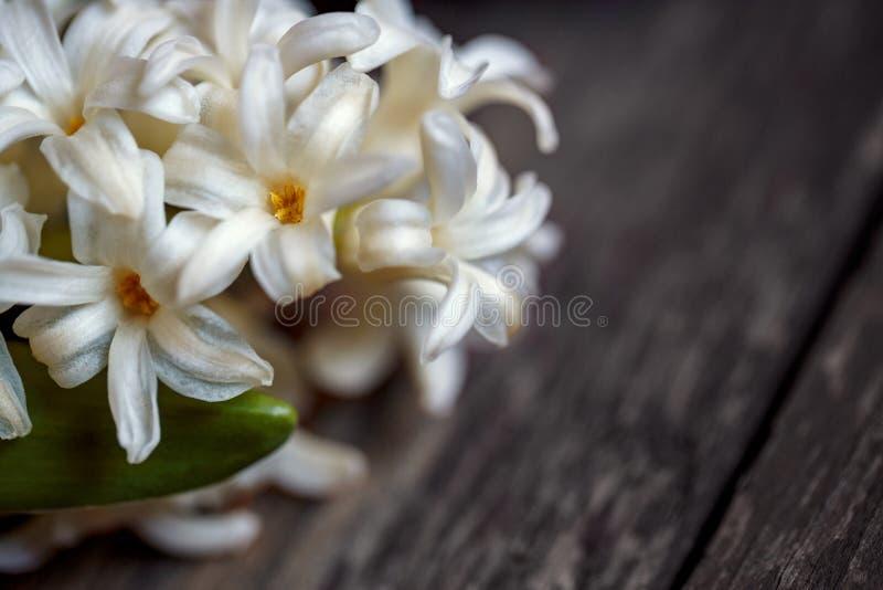Slut upp av vita hyacintblommor för vår och röd hjärta på woode royaltyfria foton