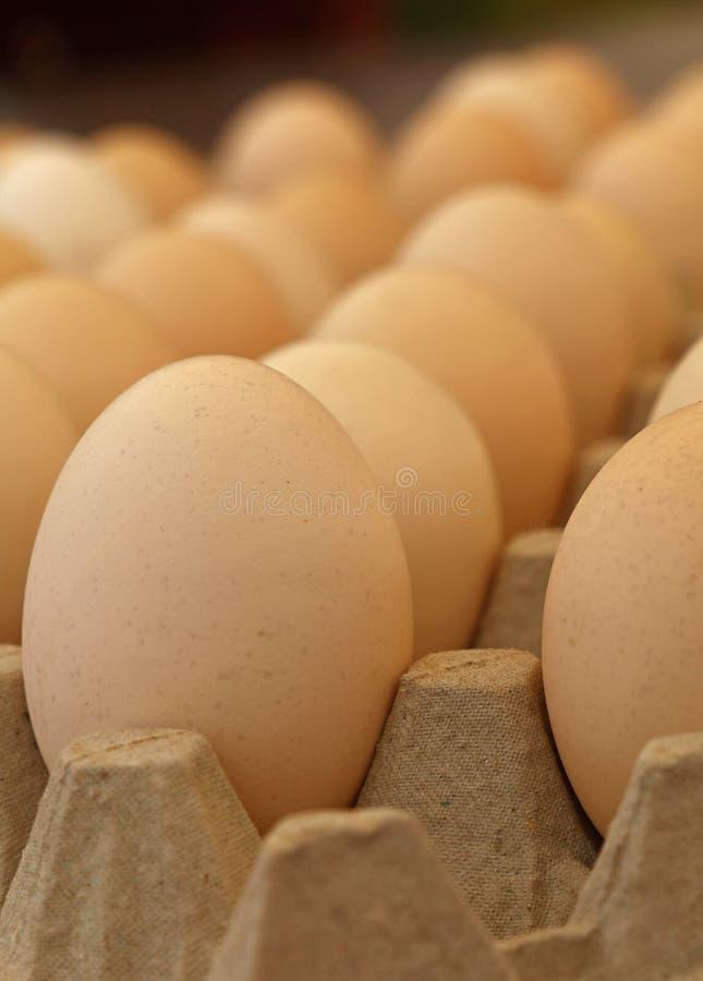 Slut upp bruna fega ägg i magasinlåda arkivfoto