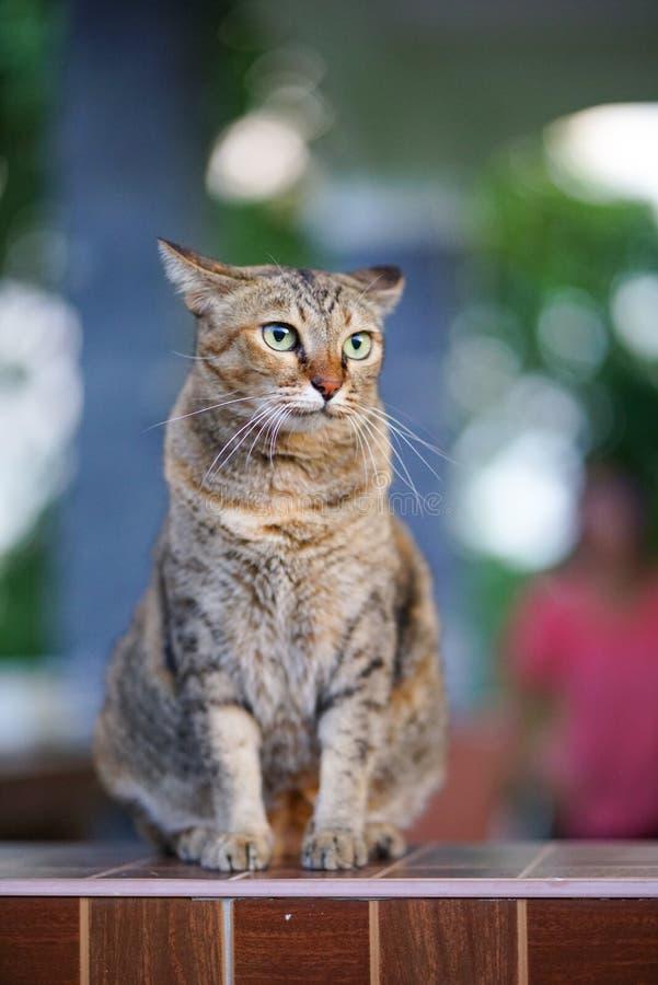 Slut upp Cat Selective Focus fotografering för bildbyråer